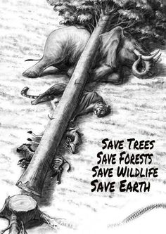 Help save all wildlife on Earth by protecting the trees!