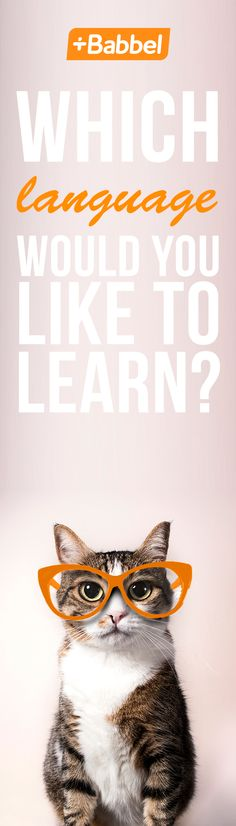 You have cat to be kitten me right now! You only know one language? Change that meow with Babbel, the best way to learn a language.