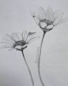 Quick drawing ☺ #draw #drawing #sketch #sketching #art #arty #artwork #flower #flowers #daisy #blackandwhite #pencil #pencildrawing #detail… Daisy Drawing, Wildflower Drawing, Realistic Flower Drawing, Lilies Drawing, Realistic Drawings, Tulip Drawing, Flower Pencil Drawings, Sketches Of Flowers, Pencil Art