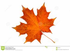 From A Series: Autumn Leaf... Stock Images - Image: 303974