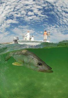 grouper randki Miami