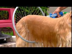 Woof washer 360 - Amazing dog washing system that washes your dog's hard-to-reach areas with 360 degrees of clean in less than 1 minute. Clever Inventions, Dog Cleaning, Dog Wash, Dog Shower, Animal Decor, Dogs Of The World, Dog Houses, Dog Accessories, Dog Life
