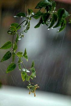 Plants are so beautiful after rain, such a vibrant green. Rainy Mood, Rainy Night, Rainy Days, I Love Rain, No Rain, Walking In The Rain, Singing In The Rain, Smell Of Rain, Rain Go Away