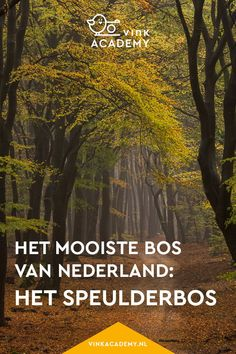Fantastic Speulder bos in de herfst - Dansende bomen Terrific De mooiste metropolis within . Places Around The World, Travel Around The World, Going On A Trip, Weekender, Travel Memories, Top Of The World, Holland, Go Outside, Staycation