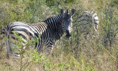 Simbabwe Rundreisen - Jetzt Urlaub buchen! |Tai Pan Nationalparks, Animals, Yellow Fever, Zimbabwe, Rainy Season, Waterfall, Animales, Animaux, Animal