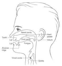 galaxy note 3 galaxy note and lollipops on pinterest : vocal tract diagram practice - findchart.co