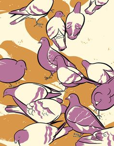 Ethan Rilly Pigeons (I frickin love pigeons!)