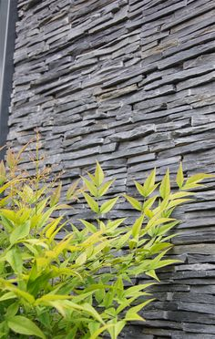 This is a slate wall panelling system which you might consider for the retaining wall and step risers? It is more rustic than the Charcoal one and a bit darker.