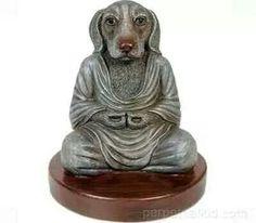 Spiritual dog.