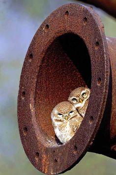 lovebirds :)