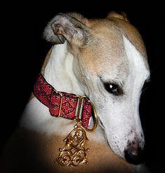 Image Result For Posh Pawz Martingale Collars Designer Dog Coats