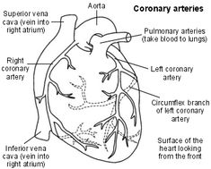 Acute coronary syndrome is a term given by doctors for various heart conditions, including a myocardial infarction (heart attack) and unstable angina. Ekg Interpretation, Acute Coronary Syndrome, Myocardial Infarction, Heart Anatomy, Heart And Lungs, Heart Conditions, Nursing Notes, Blood Vessels, Heart Health