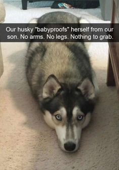 "10+ Funny pictures: Dog ""babyproof"""