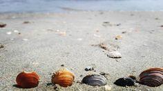 Every seashell has a story.  #seashells #blacksea #shellstory #seashellwishes #beach