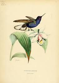 Image result for antique illustrated  encyclopaedia about hummingbirds