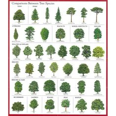 Common species of trees, shrubs, bushes and climbing plants found in London…