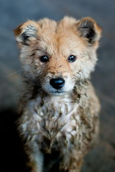 achingly cute pup (fox hybrid?)