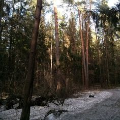 #найдисобакунафото  #North #puppy #springtime #forest #findthedogonthepicture #samoyed #самоед #walking #perfectweather #nofilter