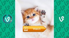 The Best Try Not To SAY WOW Cute Animal Edition Part  This Cute Animals Vine Compilation contains the most cutest pets video of all time including cat vine kitten vine puppy vine hamster vine and a lot more cute  on Pet Lovers