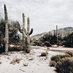 Pretty cactus scene arizona cactus desert is part of Travel - Oh The Places You'll Go, Places To Visit, Voyager C'est Vivre, Beautiful World, Beautiful Places, Desert Aesthetic, Nature Photography, Travel Photography, Adventure Is Out There
