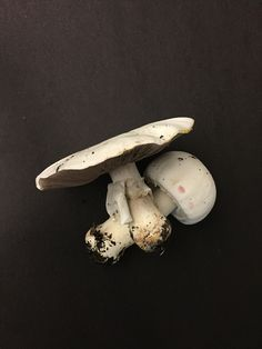 by Dani Piderman with Iphone6, Drugs, Art Photography, Stuffed Mushrooms, Concept, Food, Products, Photography, Stuff Mushrooms
