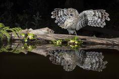Veja os candidatos a foto do ano do Sony World Photography Awards 2017 World Photography, Photography Awards, Photos 2016, Nature Photos, Animals Beautiful, Amazing, Wildlife, Creatures, Birds