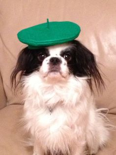 Dog Beret, Kelly Green, Small, Dog Hat