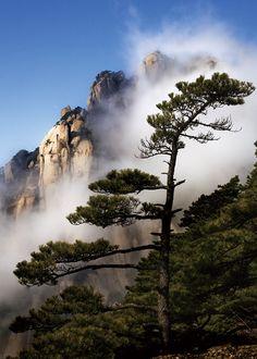 雲湧蓮花峰 - 黃山