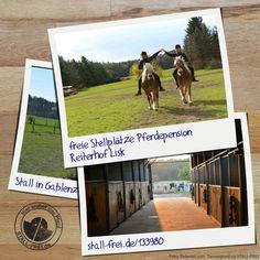 Auf dem Reiterhof in Gablenz sind zwei Plätze frei. Erfahre hier mehr über den Allergiker geeigneten Stall 👉🏻 www.stall-frei.de/133980 #stallfrei #Stallverzeichnis #Boxenverzeichnis #Allergikerstall #Gnadenbrothof #Hufrehe #BoxFrei #Offenstall #Außenbox #Paddock #Wanderreiten #Pony #Ponyverleih #Pflegepferd #Schulpferde #reiten #Weide Stall Frei, Baseball Cards, Trail Riding, Dog Playpen, Renting