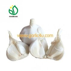 Cold Storage Garlic with good quality in 10kg/carton, logo on carton is available! Reefer Container, Super Pure, Fresh Garlic, Pure White, Packing, Mesh, Cold, Pure Products, Storage