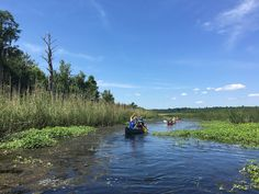 """Paddling in Alabama around Mobile: """"You'll never see it all. There is always a new place to explore,"""" Sounds awesome"""