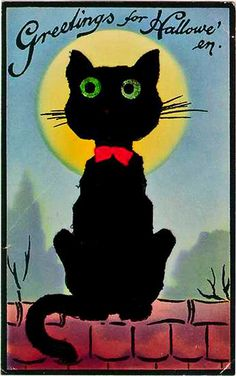 black cat    vintage postcard