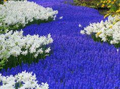 фото цветов: 34 тыс изображений найдено в Яндекс.Картинках