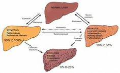 Fatty Change in Different Body Organs result of cell injury