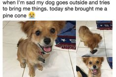 21 Funny Dog Memes That'll Reveal Exactly Who The Good Boys Are - Lovely Animals World Cute Puppies, Cute Dogs, Dogs And Puppies, Doggies, Funny Dog Memes, Funny Dogs, Ironic Memes, Silly Dogs, Funniest Memes