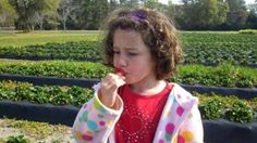 It's fresh strawberry time in the Lowcountry!