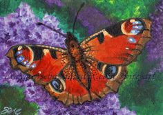 ACEO TW FEB Original Art Peacock Butterfly Insect Acrylic Painting - SMcNeill #Realism