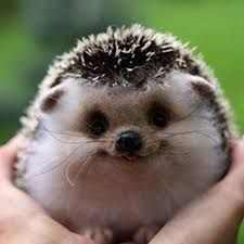 Sometimes animals look LOOK like they are smiling..what if it's false like a baby with gas