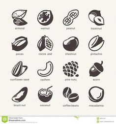 nuts-web-icon-cet-simple-pictograms-vector-icons-collection-40937510.jpg 1,300×1,390 pixels