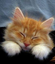 Terrific -> Beautiful Cats Wallpapers Download.