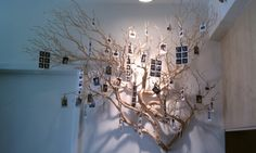 I would love to get my hands on branches like these!