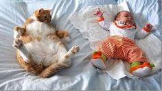Risultati immagini per bimbi e gattini