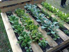 Pallet/skid planter