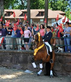 Road To The Olympics: Jan Ebeling, Part 3   The Chronicle of the Horse