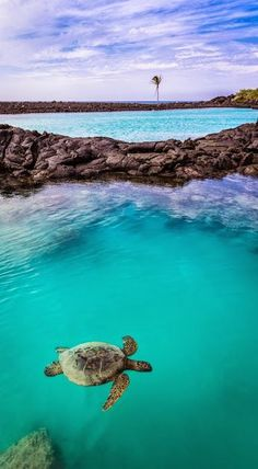 Sea Turtle at Kiholo Bay - Kona Coast, Hawaii Travel Honeymoon Backpack Backpacking Vacation Hawaii Vacation, Hawaii Travel, Dream Vacations, Oh The Places You'll Go, Places To Travel, Places To Visit, Mahalo Hawaii, Hawaii Ocean, Hawaii Water