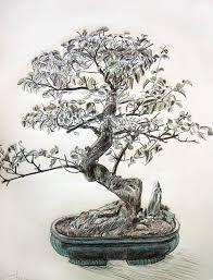 ผลการค้นหารูปภาพสำหรับ dibujos de arboles sin hojas a lapiz