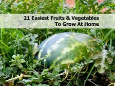 21 Easiest Fruits & Vegetables To Grow At Home