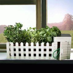 Mini Giardino Da interni Con Semi Assortiti