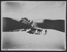 Merin, camel leader, at head of expedition caravan crossing the great dune of Tsagan Nor Valley, Mongolia, 1925 by James B. Shackelford