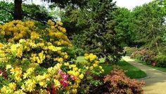Rhododendron und Azaleen im Rhododendronpark bei Dresden